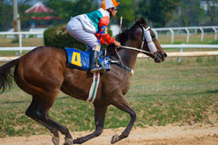 Primo piano dei cavalli di corsa che iniziano una corsa Immagine Stock Libera da Diritti