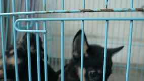 Primo piano dei cuccioli tristi nel riparo dietro il recinto che aspetta per essere salvato e per adottato alla nuova casa Riparo archivi video