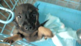 Primo piano dei cuccioli tristi nel riparo dietro il recinto che aspetta per essere salvato e per adottato alla nuova casa Riparo stock footage