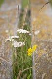 Primo piano dei fiori Immagine Stock