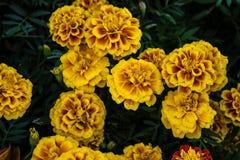 Primo piano dei fiori di colore immagini stock