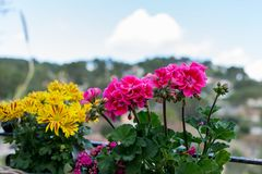 Primo piano dei fiori gialli e rosa contro un fondo unfocused Bello sfondo naturale fotografia stock
