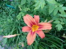 Primo piano dei fiori rossi e bianchi Fotografie Stock Libere da Diritti