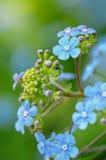 Primo piano dei fiori viola Immagini Stock
