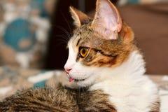 Primo piano dei gatti Fotografia Stock Libera da Diritti