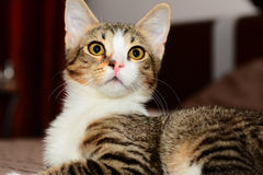 Primo piano dei gatti Immagini Stock Libere da Diritti