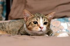 Primo piano dei gatti Immagine Stock Libera da Diritti