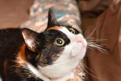 Primo piano dei gatti Fotografia Stock