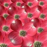 Primo piano dei petali Fotografia Stock