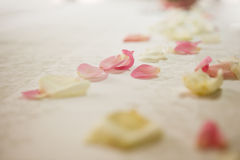 Primo piano dei petali di rosa Immagine Stock Libera da Diritti