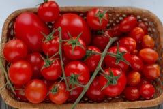 Primo piano dei pomodori ciliegia freschi in un canestro di vimini su fondo bianco, fuoco selettivo Immagine Stock