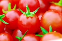 Primo piano dei pomodori di ciliegia. Fotografia Stock