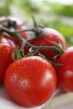 Primo piano dei pomodori di ciliegia sulla vite Fotografie Stock Libere da Diritti