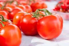 Primo piano dei pomodori rossi brillanti della vite da vendere nella stalla del mercato di Sineu, Maiorca Immagine Stock Libera da Diritti