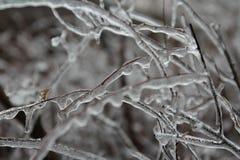 Rami coperti di ghiaccio Fotografia Stock Libera da Diritti
