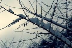 Primo piano dei rami di albero con neve e ghiaccioli su loro Immagine Stock