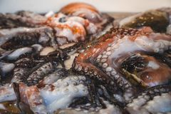 Primo piano dei tentacoli freschi del polipo sul contatore di un mercato ittico italiano Alimento e cucina immagine stock libera da diritti