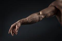 Primo piano del braccio e del torso muscolari atletici Immagine Stock Libera da Diritti