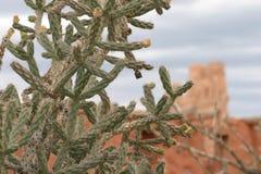 Primo piano del cactus con la missione nel fondo, Abo Pueblo, New Mexico Fotografie Stock Libere da Diritti