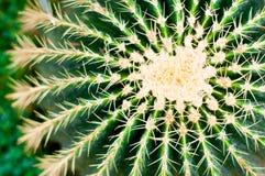 Primo piano del cactus Particolare succulente della pianta Immagini Stock