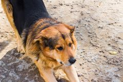 Primo piano del cane sulla terra Fotografia Stock