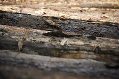 Primo piano del ceppo del tronco di albero Immagini Stock