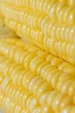 Primo piano del cereale Immagini Stock Libere da Diritti