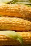 Primo piano del cereale Fotografia Stock