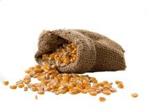 Primo piano del cereale del grano su fondo bianco Immagini Stock Libere da Diritti