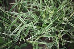 Primo piano del cespuglio dell'erba verde su un'aiola nel parco fotografia stock