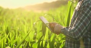 Primo piano del chiarore della lente: le mani dell'agricoltore che tengono il computer della compressa e che toccano e che ispezi archivi video