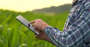 Primo piano del chiarore della lente: le mani dell'agricoltore che tengono il computer della compressa e che toccano e che ispezi stock footage