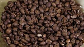 Primo piano del chicco di caffè del fondo di Defocus in piatto 4K Arabica deliziosa del campo video d archivio