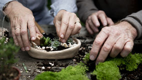 Primo piano del concetto organico fresco del giardino Immagini Stock Libere da Diritti