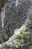 Primo piano del cristallo di quarzo illuminato in sole con i ghiaccioli Immagini Stock Libere da Diritti