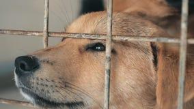Primo piano del cucciolo triste nel riparo dietro il recinto che aspetta per essere salvato e per adottato alla nuova casa Riparo archivi video