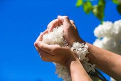 Primo piano del cuore del fiore in mani maschii Immagini Stock Libere da Diritti