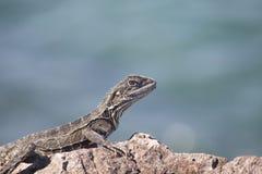 Primo piano del drago di acqua fotografie stock