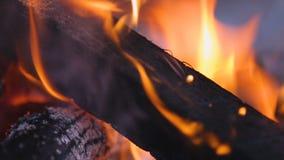 Primo piano del fascio di legno in fiamma, negli incendi forestali e nei danni, emergenza di incendio doloso video d archivio