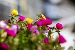 Primo piano del fiore immagine stock