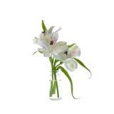 Primo piano del fiore di Alstroemeria Fotografia Stock Libera da Diritti