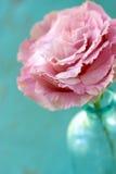 Primo piano del fiore di Lisianthus Immagine Stock