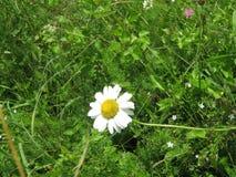 Primo piano del fiore in erba fotografie stock