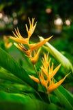 Primo piano del fiore esotico luminoso Immagine Stock