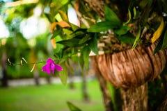 Primo piano del fiore tropicale sull'albero Immagine Stock Libera da Diritti