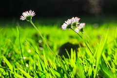 Primo piano del fiore variopinto Fotografia Stock