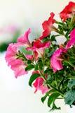 Primo piano del fiore variopinto Fotografia Stock Libera da Diritti