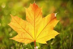 Primo piano del foglio di autunno fotografia stock libera da diritti