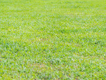 Primo piano del fondo dell'erba verde Fotografie Stock