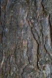 Primo piano del fondo della corteccia del pino Fotografie Stock